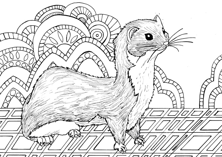 Animal Dreamers Art Therapy Coloring Book Backwards Burd